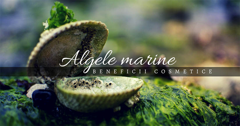 Algele marine – beneficii cosmetice